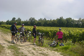 Loire cycling tour vineyard