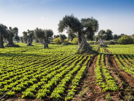 Five Essential Reasons to visit Puglia in 2019