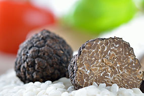 Black truffles-dreamstimemaximum_2252552