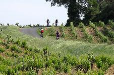 cycling_vineyards.jpg