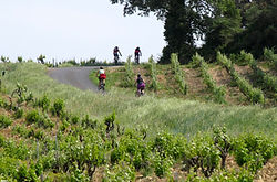 cycling_vineyards.jpg