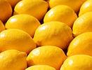Menton lemons-dreamstimelarge_1122659.jp