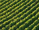 Burgandy-dreamstimelarge_28516208.jpg