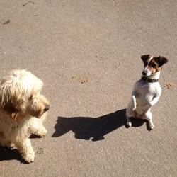 Nougat und Zoe
