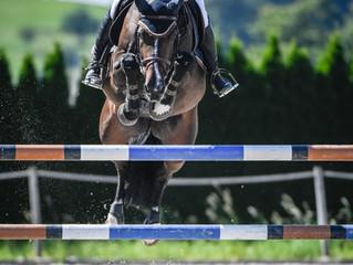 Babyglück und gute Pferde im Stall