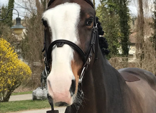 Back on Track - Pferde sind topfit!