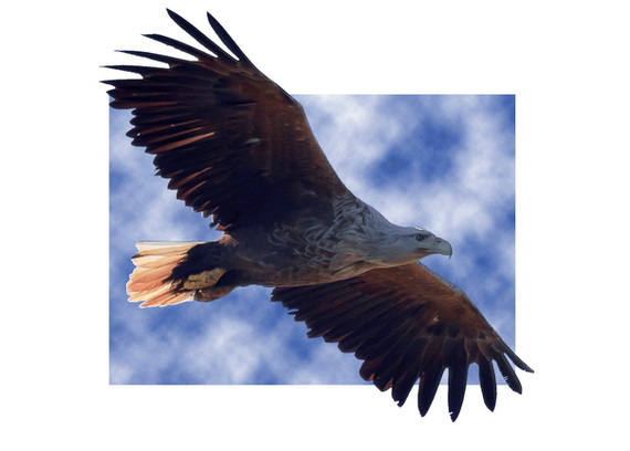 eagleinair.jpg