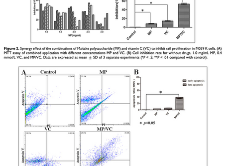 Synergistic Effect of Maitake Mushroom in combination with Vitamin C in Neuroglioma Cell