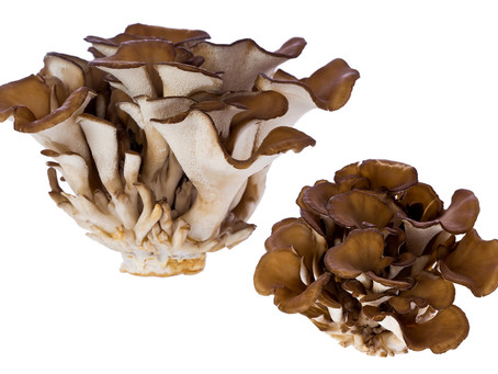 Mushrooms to help diabetes??