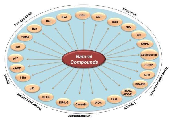 Molecular Targets for Colorectal Cancer