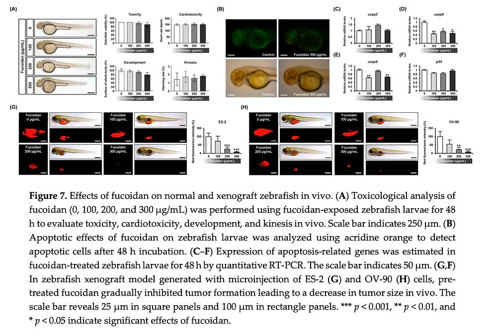 Effects of fucoidan on zebrafish