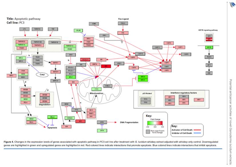 Reishi Whiskey Affymetrix Gene Expression Analysis