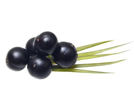 Açaí Berry for Cardiovascular Protection
