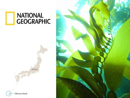 National Geographic promotes seaweed in diet!