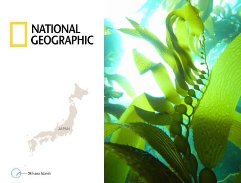 Seaweed National Geographic Okinawa