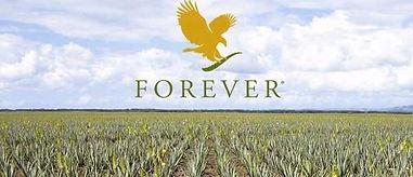 forever-living-aloe-vera-plantation-e150