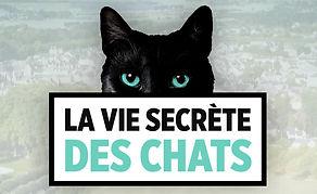 La Vie secrète des chats, TF1