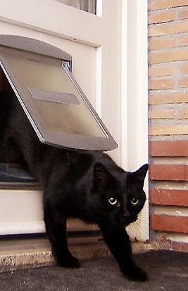 TF1, La vie secrète des chats
