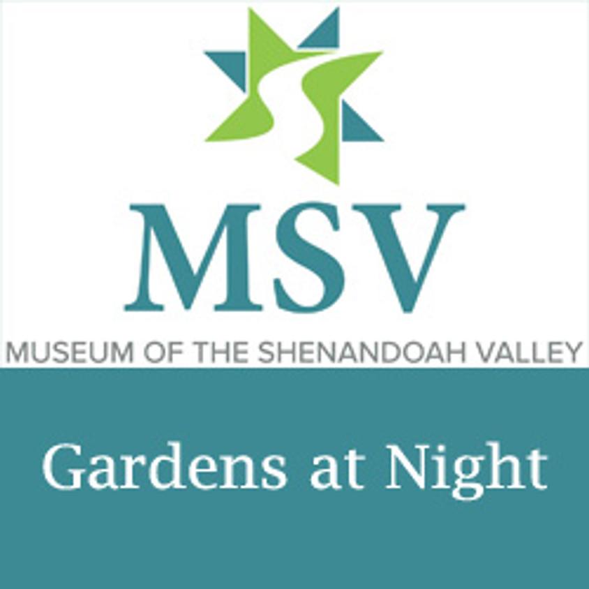 MSV Gardens at Night