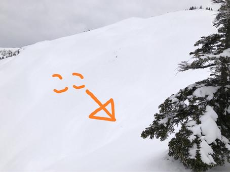 スキー拾いました