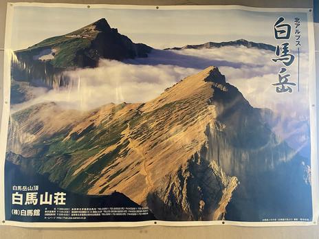 お花の白馬岳登山