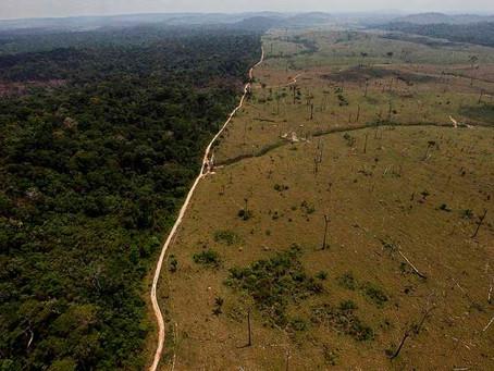 Ministério do Meio Ambiente destina R$ 500 milhões para conservação e recuperação da Amazônia