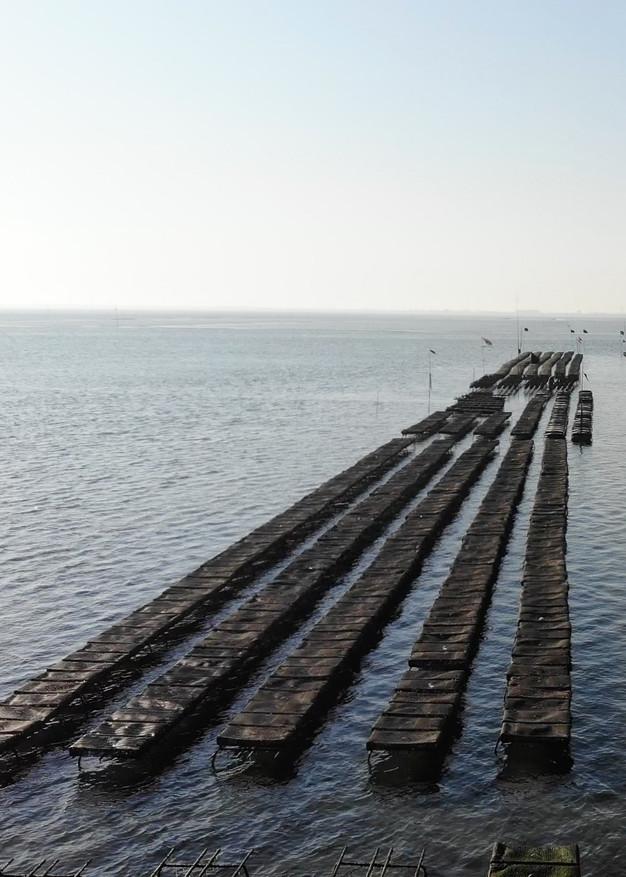 Delta Ostrea Percelen