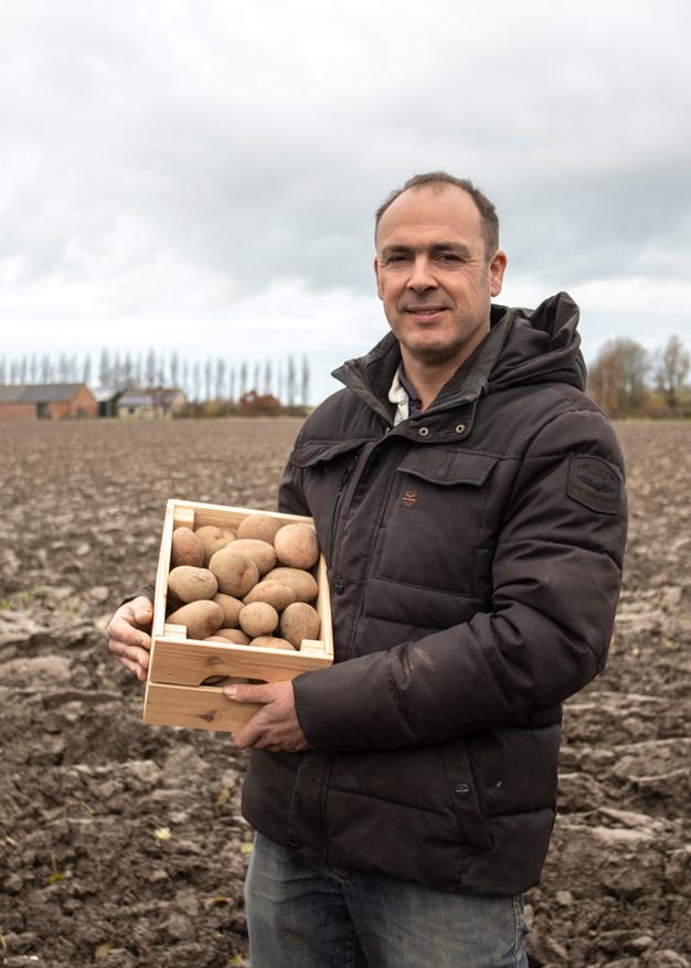 Rode Pippo aardappel