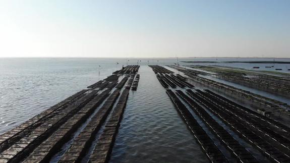 Delta Ostrea