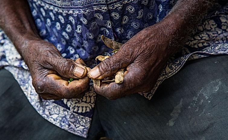 Hands Picking Beans.jpg