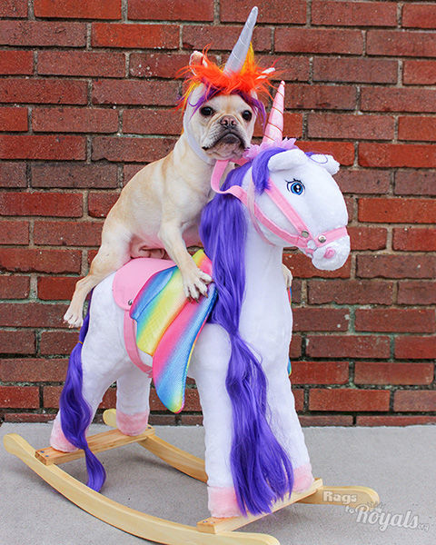 French Bulldog Riding a Pegasus