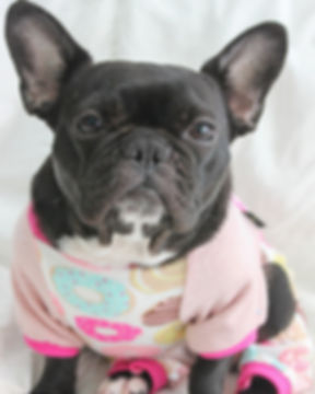 French Bulldog Wearing Donut Pajamas