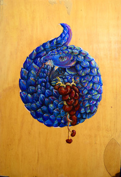 Pangolin with Kidney Grapes