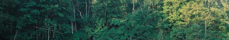 Plitvcka Jezera National Park
