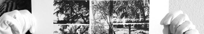 Estudo I (Natureza), 2020