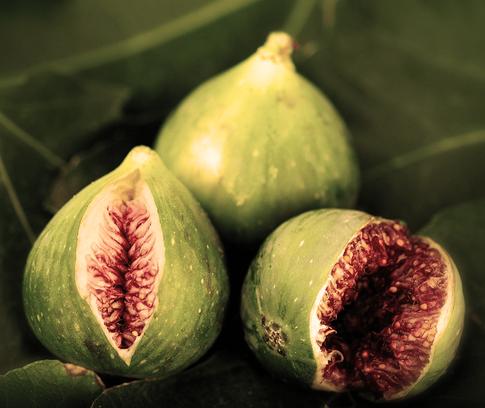 FIGUIER - Le parfum Figuier nous emporte vers des souvenirs de siestes au soleil, à l'ombre des figuiers du Maroc.