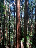 AZ Trees.png