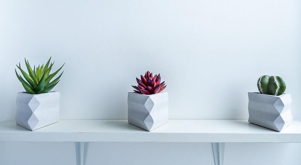 Cactus%20pot.%20Concrete%20pot.%20Cactus
