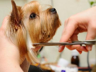 pet-grooming.jpeg
