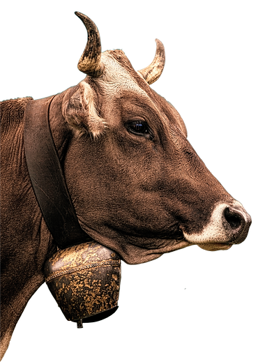 cow-2411032_1920.png