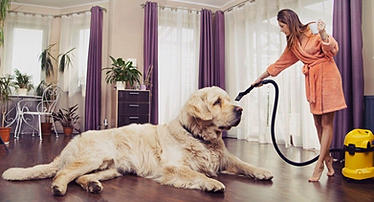 Pet Stain Removal Service Carpet Care Specialist Panama