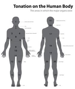 Tonation Body