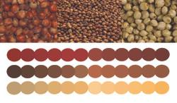 Sorghum Color Palette #1