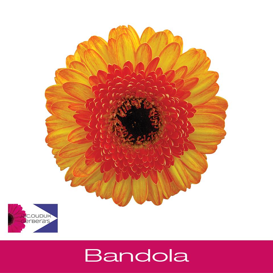 Bandola