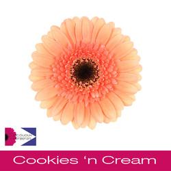 Cookies_'n_Cream