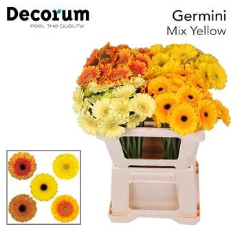 5. Yellow Mix