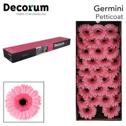 40. Petticoat - doos-roze-zwartoog