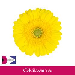 Okibana