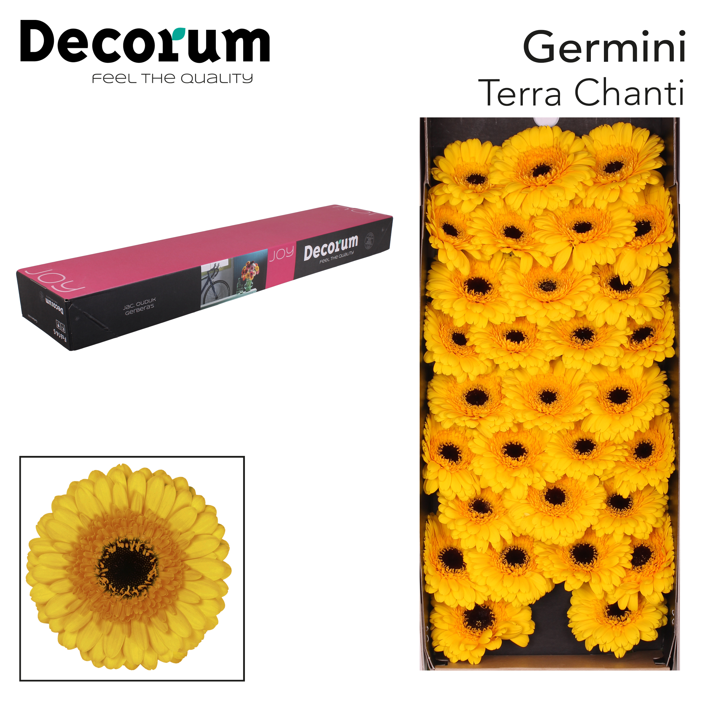 12. TerraChanti - doos-geel-zwartoog