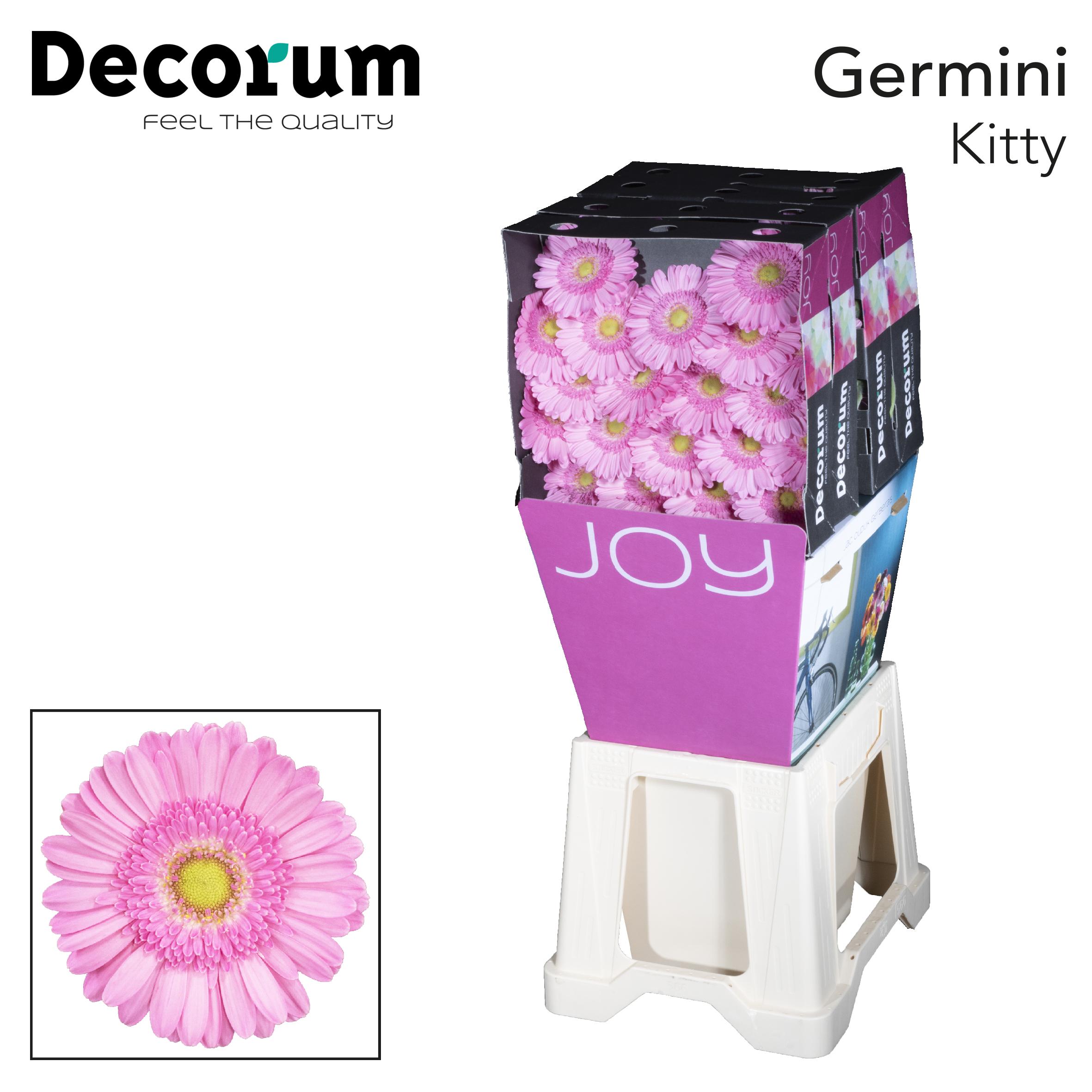 36. Kitty-Dia-roze-groenoog